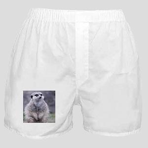 adorable meerkat 03 Boxer Shorts