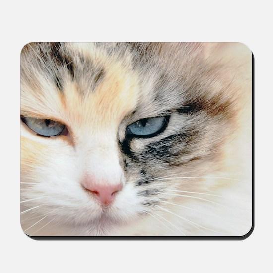 Sweet Cat Mousepad
