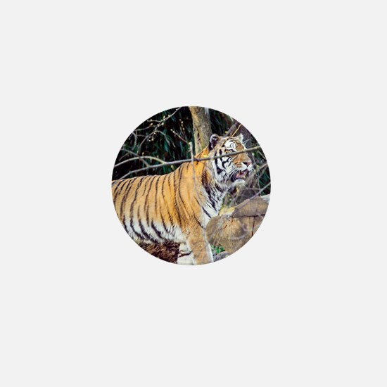 Tiger in the woods Mini Button