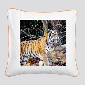 Tiger in the woods Square Canvas Pillow