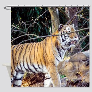 Tiger in the woods Shower Curtain