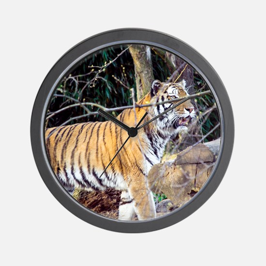 Tiger in the woods Wall Clock