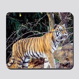 Tiger in the woods Mousepad
