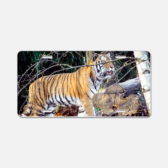 Tiger in the woods Aluminum License Plate