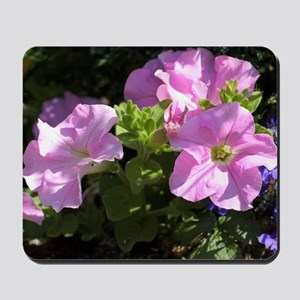 Pink surfinia flowers Mousepad