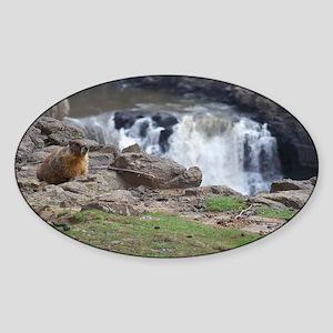marmot and palouse falls Sticker (Oval)