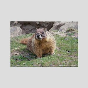 Marmot Magnets