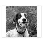 dog portrait Posters
