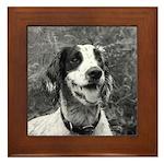 dog portrait Framed Tile