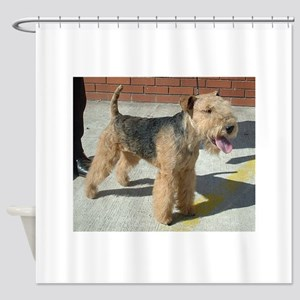 lakeland terrier full Shower Curtain