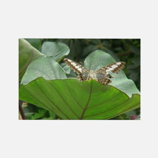 Butterfly on a Plant Rectangle Magnet