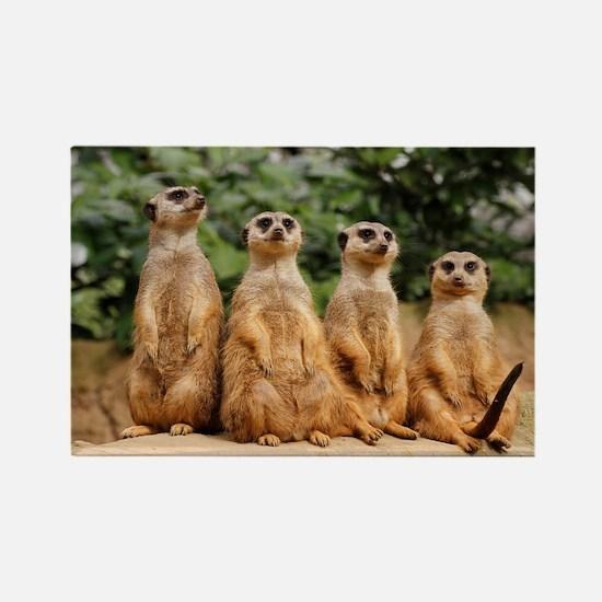 Meerkat-Quartett 001 Rectangle Magnet