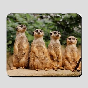 Meerkat-Quartett 001 Mousepad