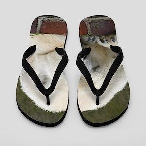 Polar bear 003 Flip Flops