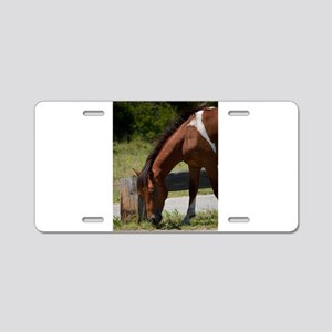 Wild Pony Snack Time Aluminum License Plate