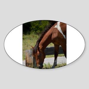 Wild Pony Snack Time Sticker