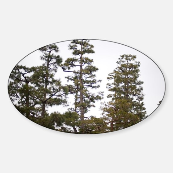 pine tree background Sticker (Oval)