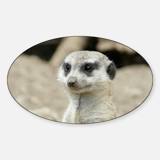 Meerkat Sticker (Oval)