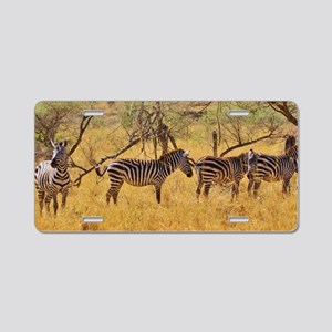 Wild Zebra Animal Aluminum License Plate