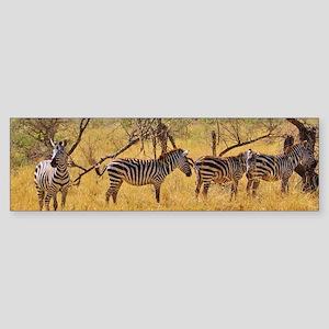 Wild Zebra Animal Sticker (Bumper)