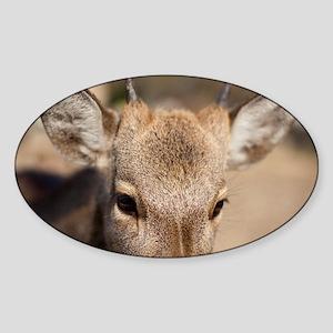 Deers Head Sticker (Oval)