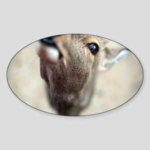 Deer macro Sticker (Oval)