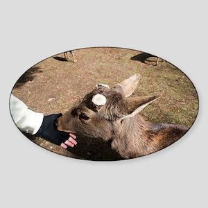 nara deer Sticker (Oval)