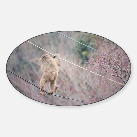 aerial monkey Sticker (Oval)