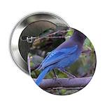 Steller's Jay on Branch Button