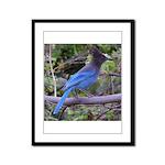 Steller's Jay on Branch Framed Panel Print