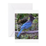Steller's Jay on Branch Greeting Cards (Package of