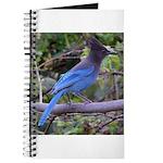 Steller's Jay on Branch Journal