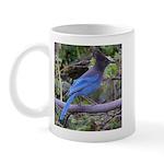 Steller's Jay on Branch Mug