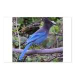Steller's Jay on Branch Postcards (Package of 8)