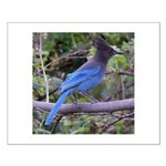 Steller's Jay on Branch Small Poster