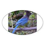 Steller's Jay on Branch Oval Sticker