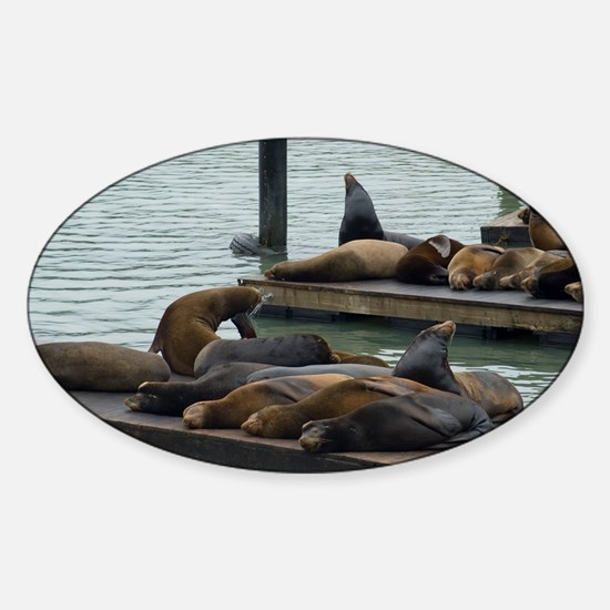 san francisco seals Sticker (Oval)