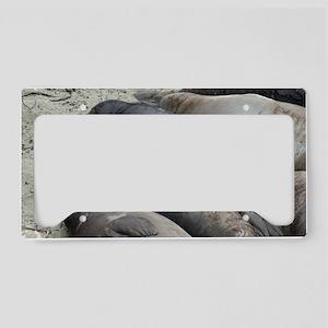 line of black seals License Plate Holder