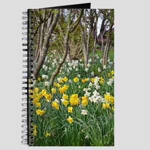Yellow spring daffodils Journal
