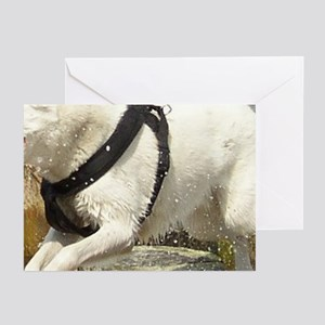 Canaan_Dog in water Greeting Cards