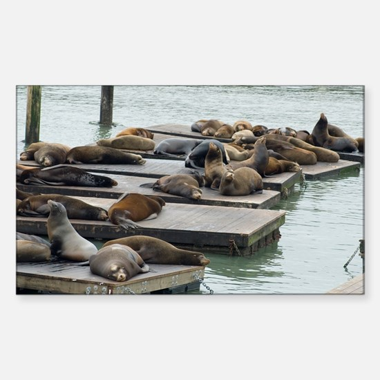 seals at fishermans wharf Sticker (Rectangle)