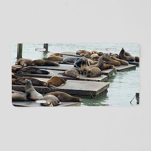 seals at fishermans wharf Aluminum License Plate