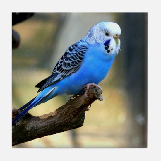 Blue Budgie Tile Coaster
