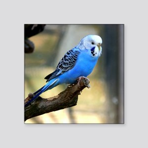"Blue Budgie Square Sticker 3"" x 3"""