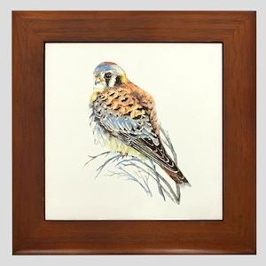 Watercolor Kestrel Falcon Bird Art Framed Tile