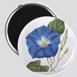 Morning Glory Magnets