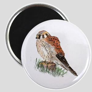 Watercolor Kestrel Falcon Bird Nature Art Magnets