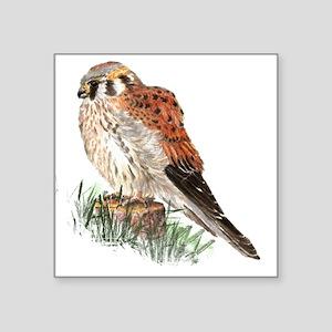 Watercolor Kestrel Falcon Bird Nature Art Sticker