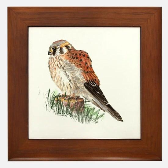 Watercolor Kestrel Falcon Bird Nature Framed Tile