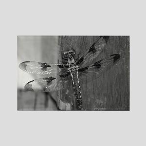 Dragonfly Black & White Rectangle Magnet